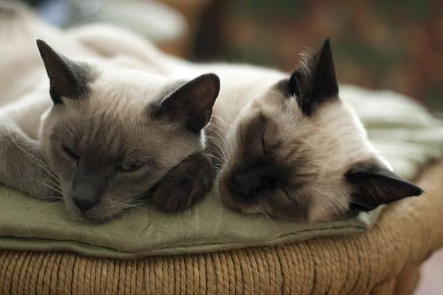 zwierzęta domowe koty