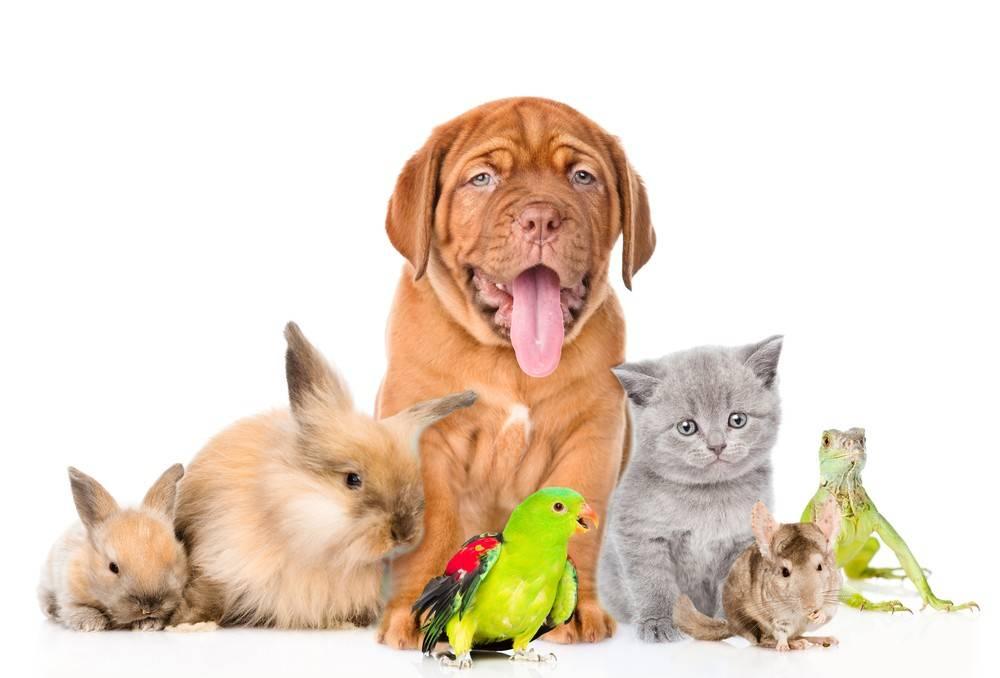 Znalezione obrazy dla zapytania domowe zwierzaki