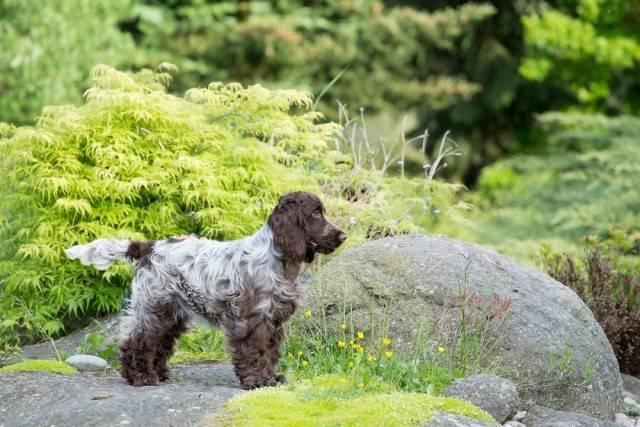 wybór odpowiedniej rasy psa - czy pies potrzebuje dużej przestrzeni do biegania