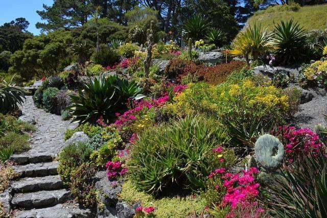 rośliny rabatowe na skalniaku