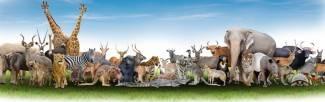 Internetowe królestwo zwierząt