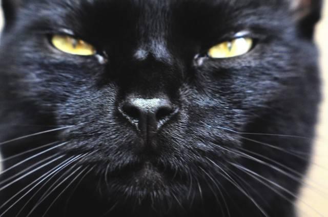 głowa kota