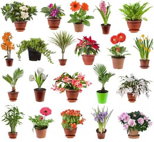Znalezione obrazy dla zapytania kwiaty doniczkowe