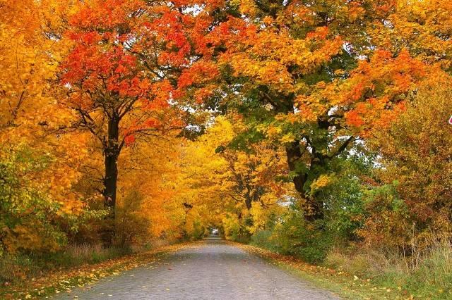 drzewa liściaste rosnące przy drodze