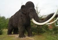 Mamuty prehistoryczne zwierzęta