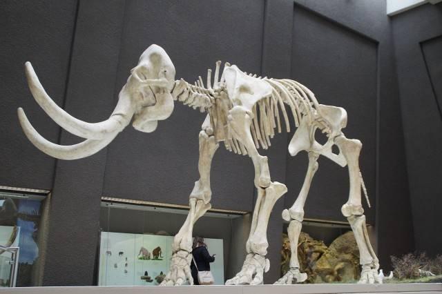 prehistoryczne zwierzęta mamuty