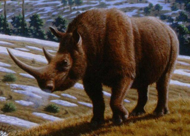 wymarły nosorożec