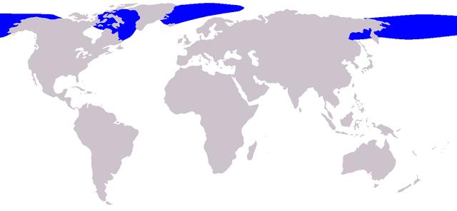 występowanie wala grenlandzkiego