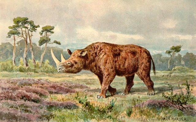 wymarły gatunek ssaka nosorożec włochaty