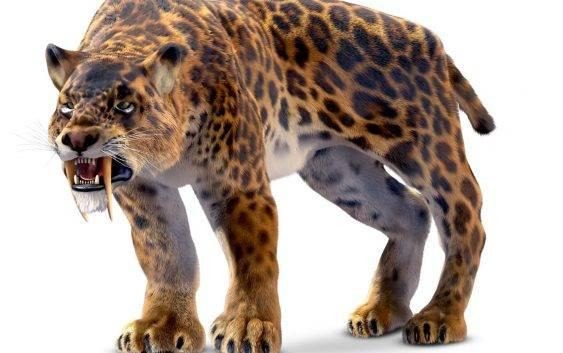 Smilodon (tygrys szablozębny, szablastozębny)