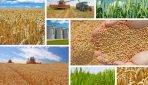 Szkodniki magazynowe zbóż ich wykrywanie i zwalczanie
