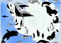 Zwierzęta Antarktydy