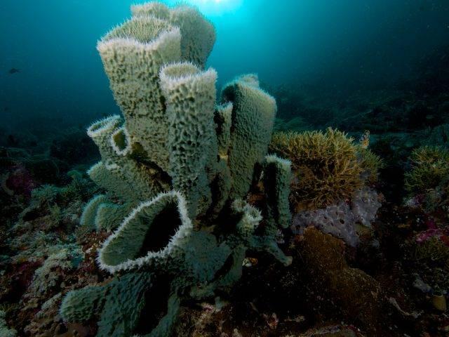 Gąbki (Porifera)
