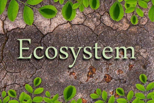 ekosystemy