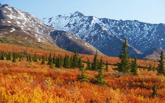 Tundra zwierzęta, klimat i roślinność