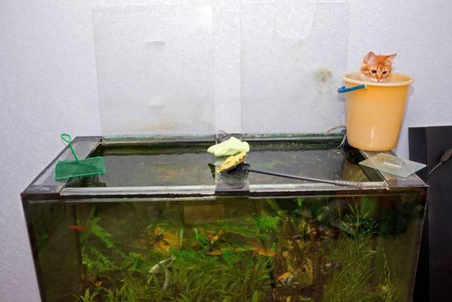 Jak czyścić szyby w akwarium