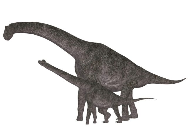 brachiozaury