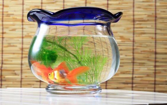 Dlaczego kula to nie akwarium dla ryb?