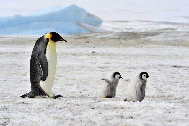 zwierzę antarktydy