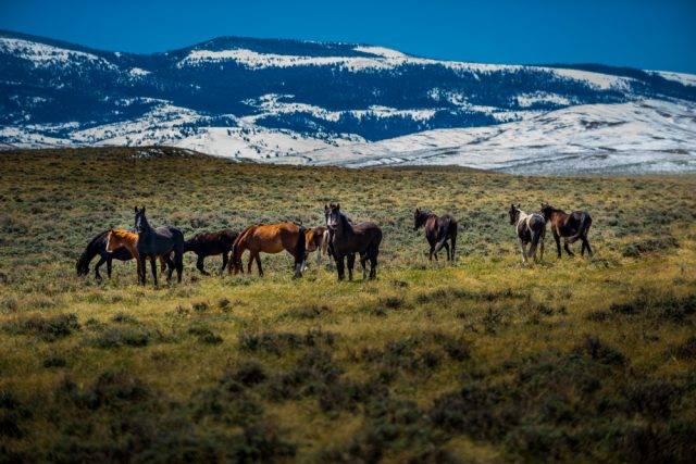 mustangi konie