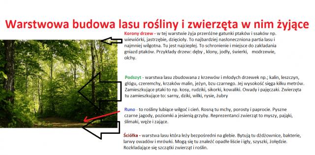 budowa lasu