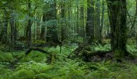 Warstwy lasu
