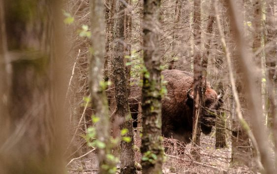Ekosystem lasu w Polsce