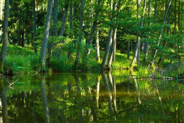 ekosystem lasu w polsce przykład