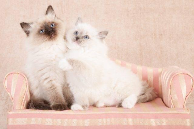 dwa kotki