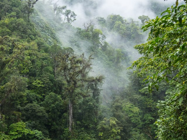 ekosystem lasu deszczowego