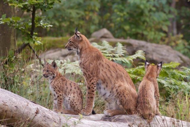 ekosystem lasu w polsce jego fauna