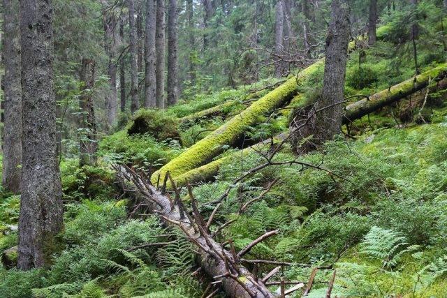 ekosystem lasu w polsce to np. Tatrzański Park Narodowy