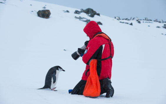 Lista ptaków Antarktyki