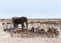 Park Narodowy Etoszy