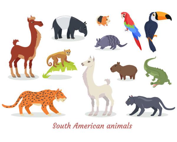 ameryka południowa zwierzęta