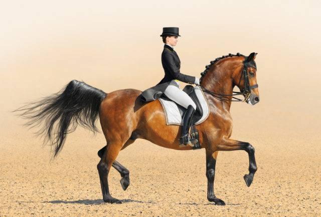 sport konny ujeżdżanie