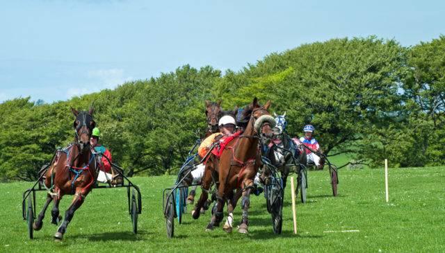Sporty konne mniej znane wyścigi kłusaków