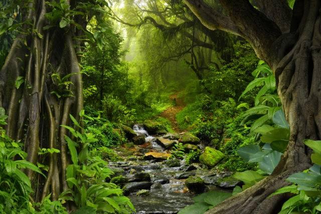 co to jest ekosystem np. dżungli