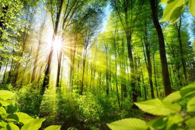 ekosystem las liściasty