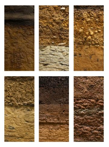 typy gleb zdjęcie