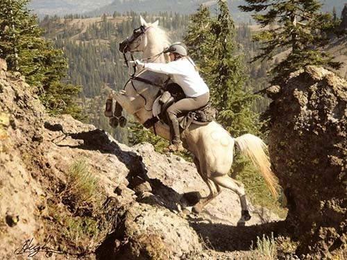 sporty konne to między innymi rajd konny