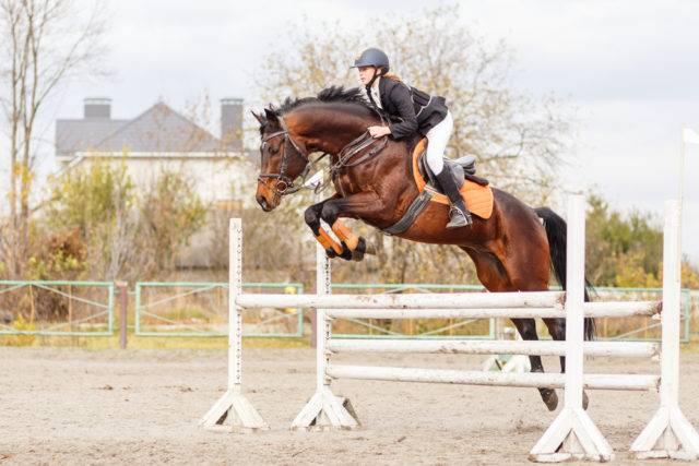 skoki to sporty konne