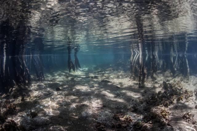 las namorzynowy widziany od dołu