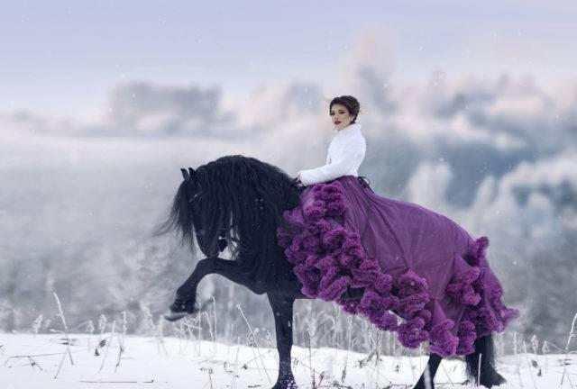 zanim kupisz konia fryzyjskiego rekreacyjnego