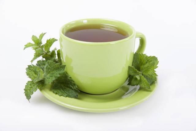 herbatka z melisy lekarskiej