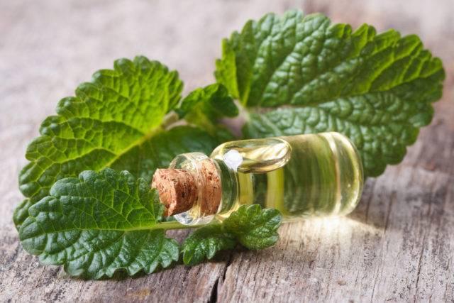 olejek z melisy lekarskiej