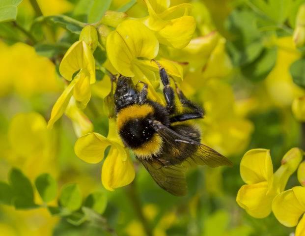 znaczenie pszczół w przyrodzie