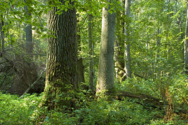 roślinnośc białowieskiego parku narodowego