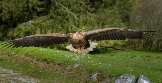 lot orła przedniego