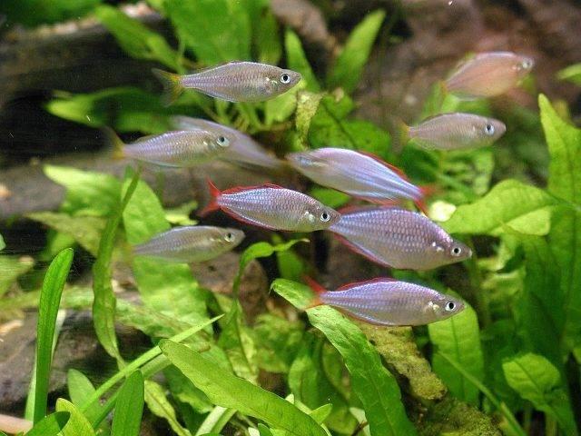 akwarium z rybkami słodkowodnymi